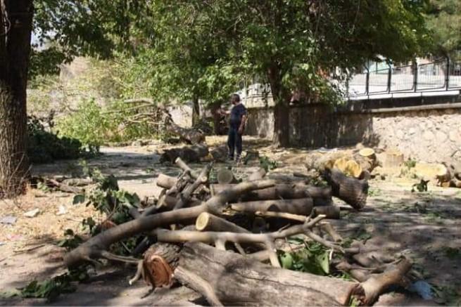 50 yıllık ağaçlar kesiliyor