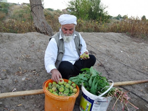 Nuri Amcanın hasat mutluluğu!