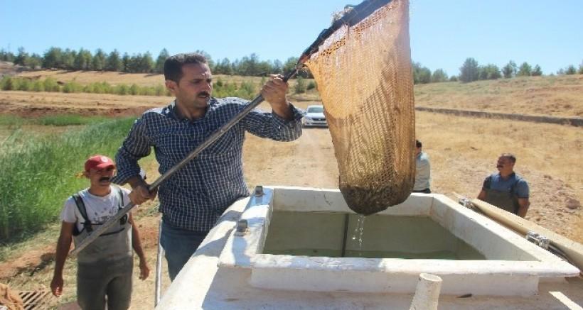 Şanlıurfa'da üretilen 17 milyon yavru balık 16 ile gönderildi