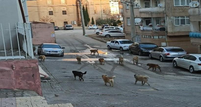 Vatandaşlar sokakta gezen başıboş köpeklerden rahatsız