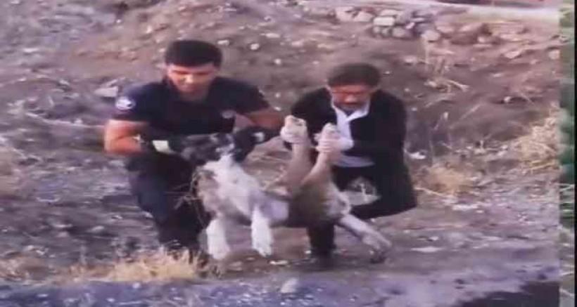 Yaralı halde bulunan köpek itfaiye ekipleri tarafından kurtarıldı
